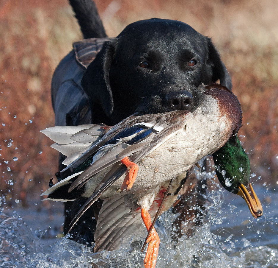 NORTH TEXAS DUCK HUNTING GUIDE SERVICE