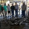 Texas Cast And Blast Trips - North Texas Waterfowl - Lake Texoma Striper Fishing